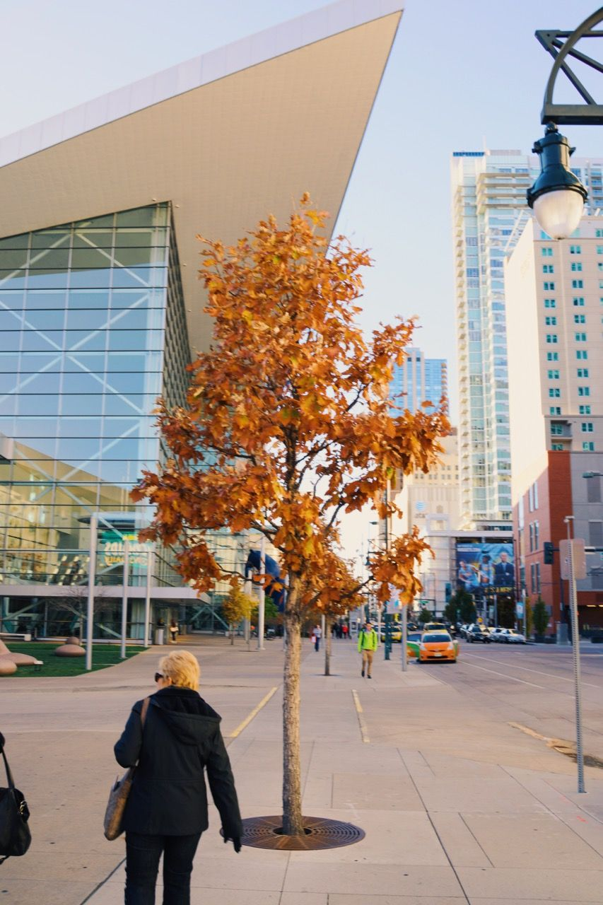 Sidewalk approaching Denver Convention Center. Young tree in planter with orange leaves in center, signifying autumn colors.